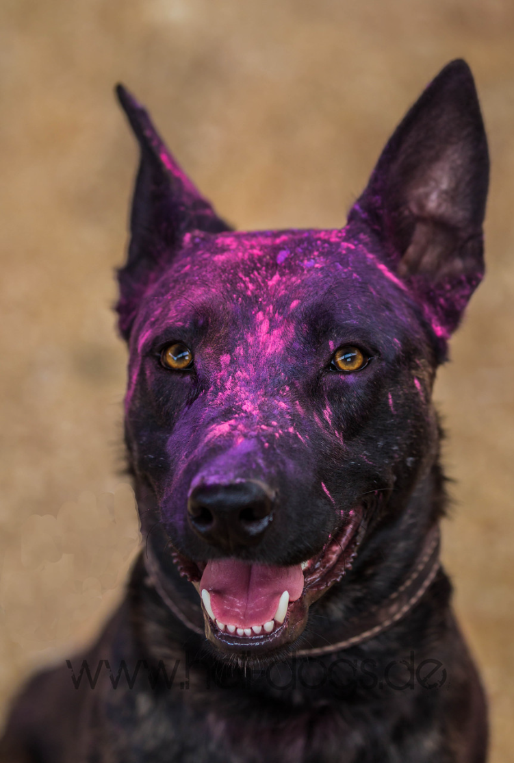 Arschlochhund – Mysterium Hundehalter