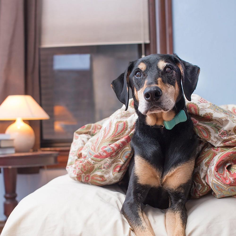 Hilfe! Mein Hund hat mehr Freunde auf Facebook als ich!
