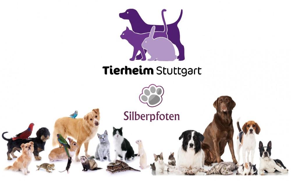 Silberpfoten-Projekt Stuttgart – auch in der Schweiz denkbar?