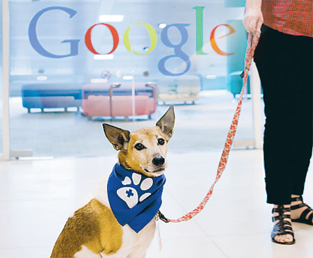 1814237-googledog