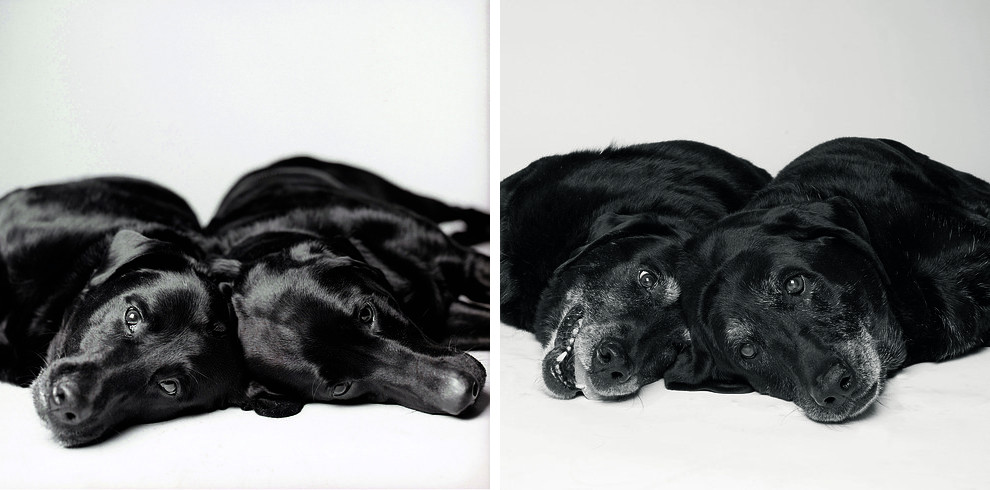 Dog Years: Faithful Friends Then & Now