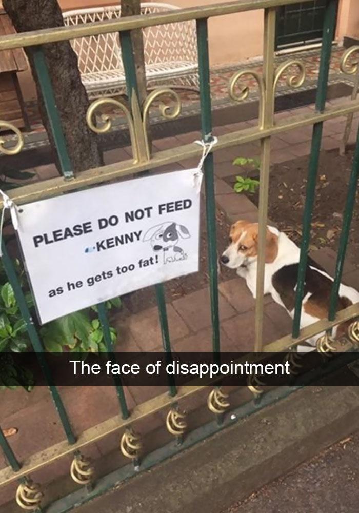 Dog Snapshots – Impaaaawsible not to laugh!