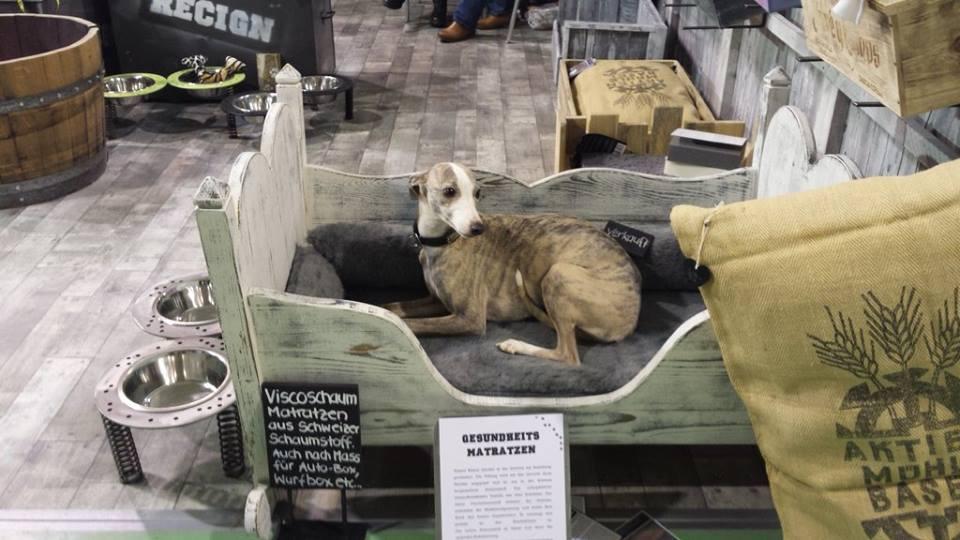 Bijou für Dog-a-holics