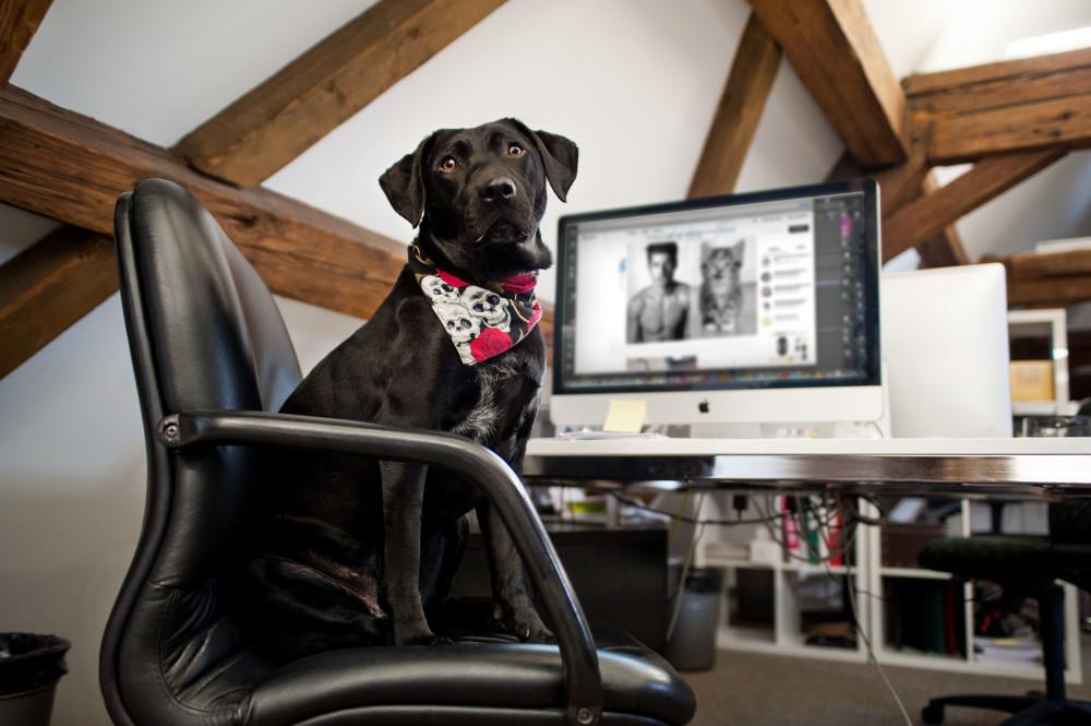 Office Dogs – Büros kommen auf den Hund!