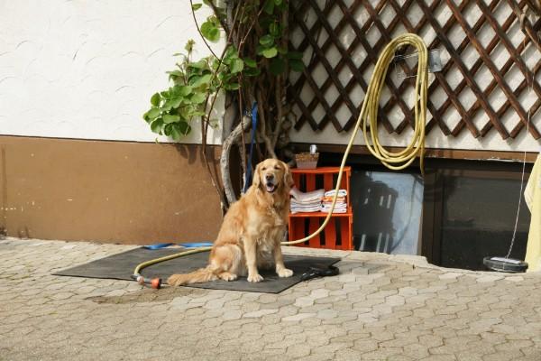 Hundefreundliches Hotel im Schwarzwald