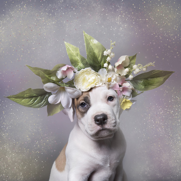 Flower Power, Pit Bulls of the Revolution
