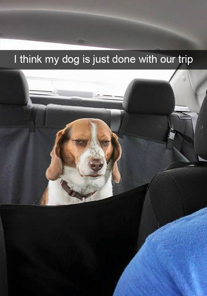 Dog Snapshots – Impaaaawsible not to laugh!